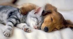 farmaci_veterinari_2.jpg